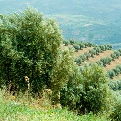 Azienda Agricola Maurizio Bilotti