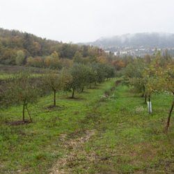 agricola-maggi