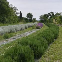 Azienda Agricola Corte Bettini