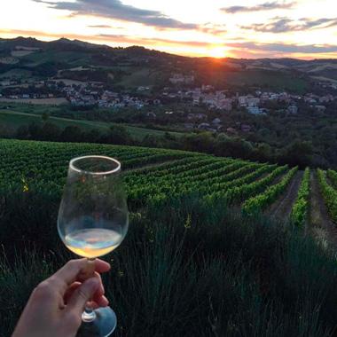 Fiorentini Vini