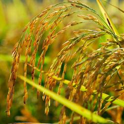 Società Agricola La Libertà