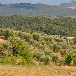 Scopone Montalcino
